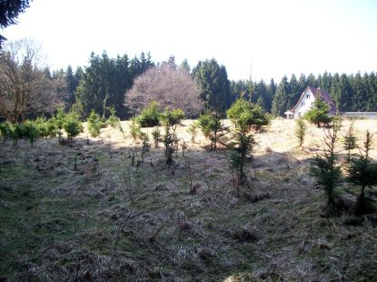 Wietfeld 2 2010 04